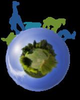 Communication animale & soins énergétiques Logo