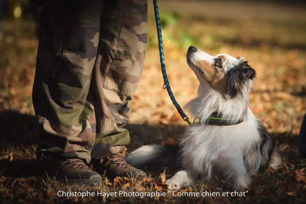 Education canine Troyes