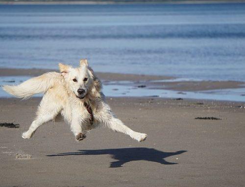 Règles de bon sens pour votre chien – garde chez un petsitter ou pension