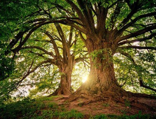 L'intelligence des arbres (vs l'intelligence des animaux pour les scientifiques)