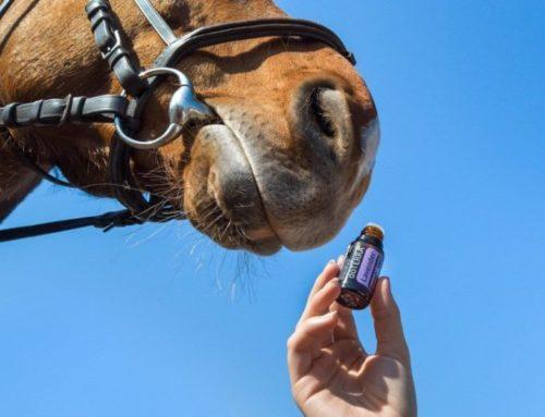 3 cas où l'aromathérapie a été bénéfique pour les animaux
